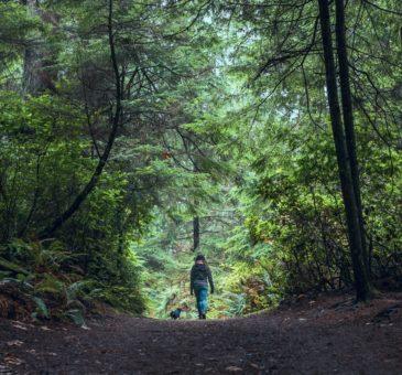 Spaziergang im einheimischen Wald